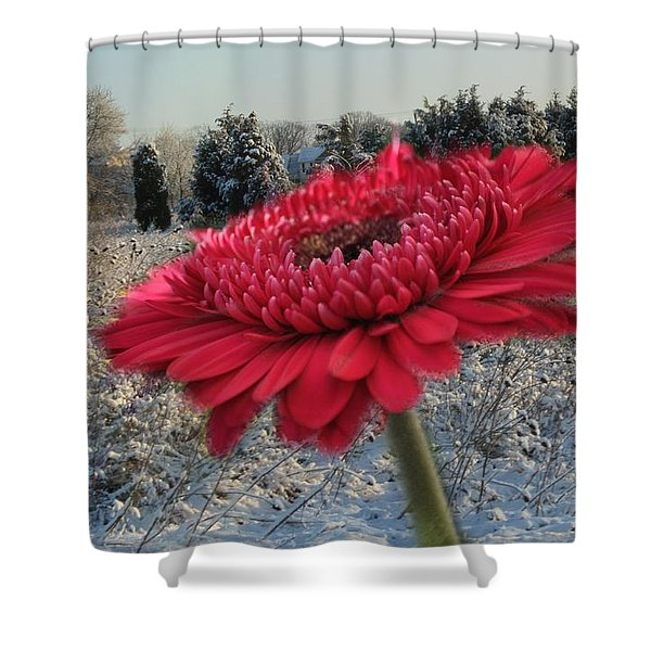Gerbera Daisy In The Snow Shower Curtain