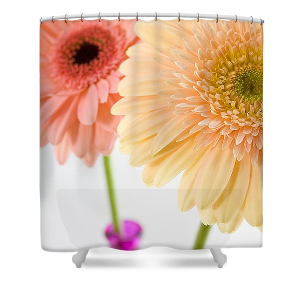 Peach And Pink Gerbera Shower Curtain