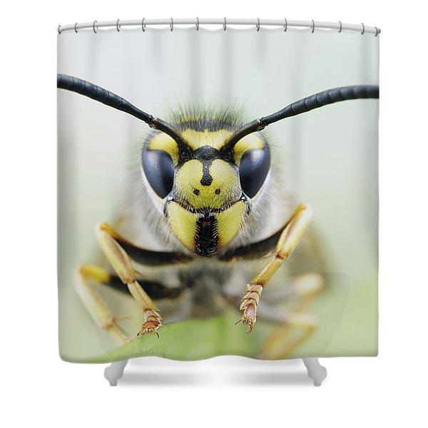 German Wasp Noord-holland Netherlands Shower Curtain