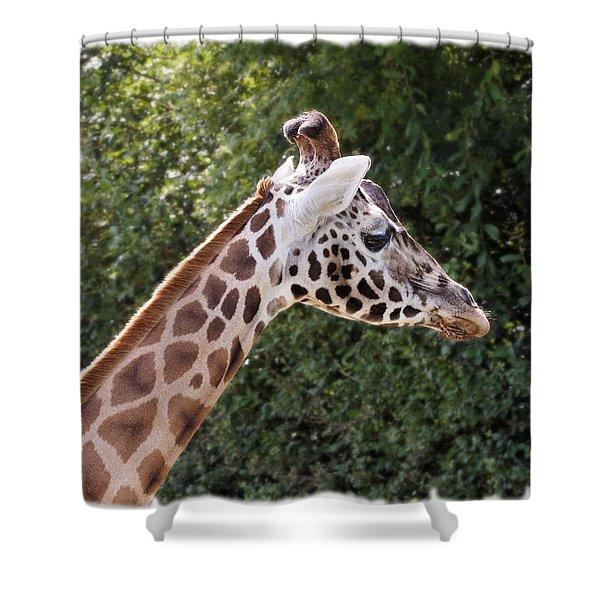 Giraffe 01 Shower Curtain