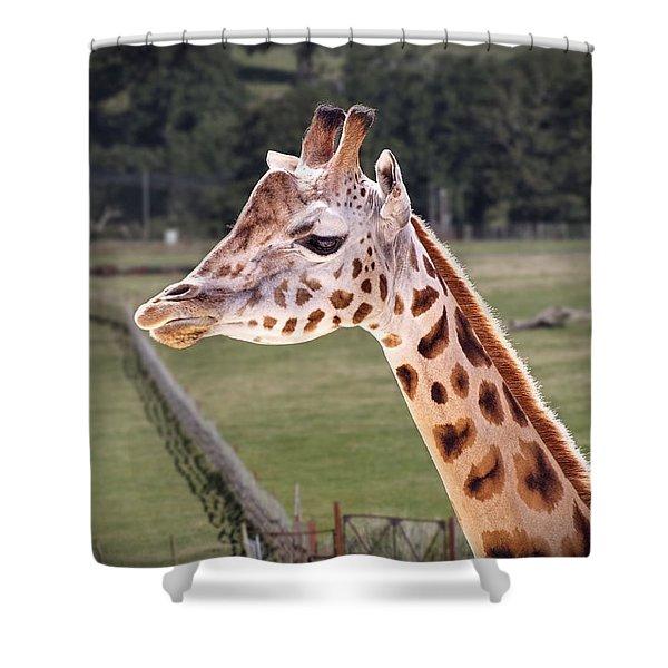 Giraffe 02 Shower Curtain