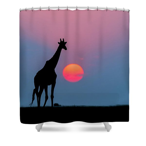 Giraffe At Sunset Chobe Np Botswana Shower Curtain