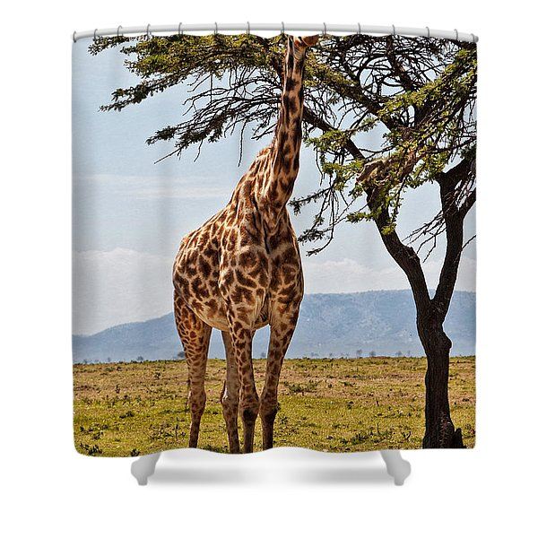 Shower Curtain featuring the photograph Giraffe In The Mara by Perla Copernik