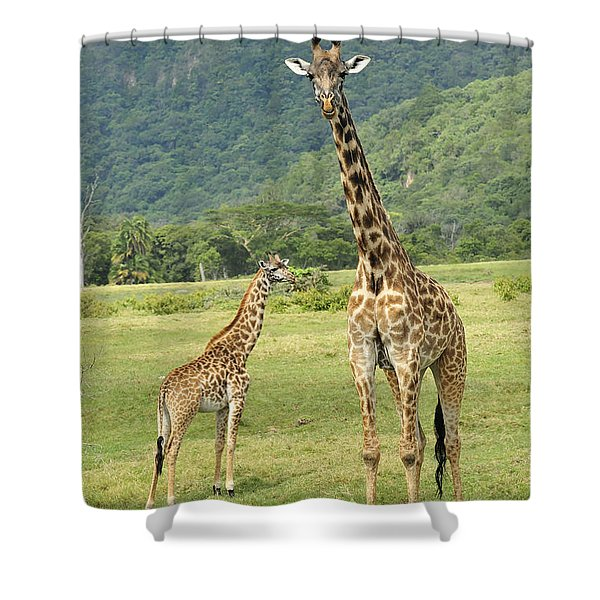 Giraffe Mother And Calftanzania Shower Curtain