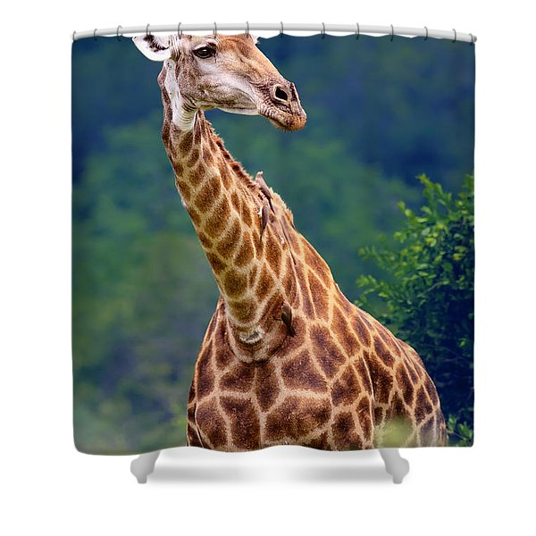 Giraffe Portrait Closeup Shower Curtain