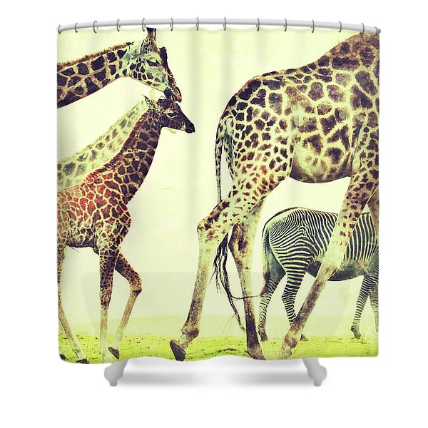 Giraffes And A Zebra In The Mist Shower Curtain