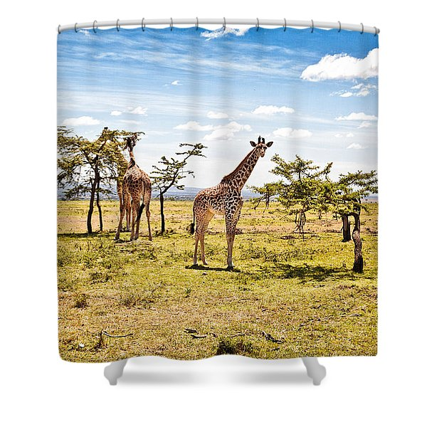 Shower Curtain featuring the photograph Giraffes In The African Savanna by Perla Copernik