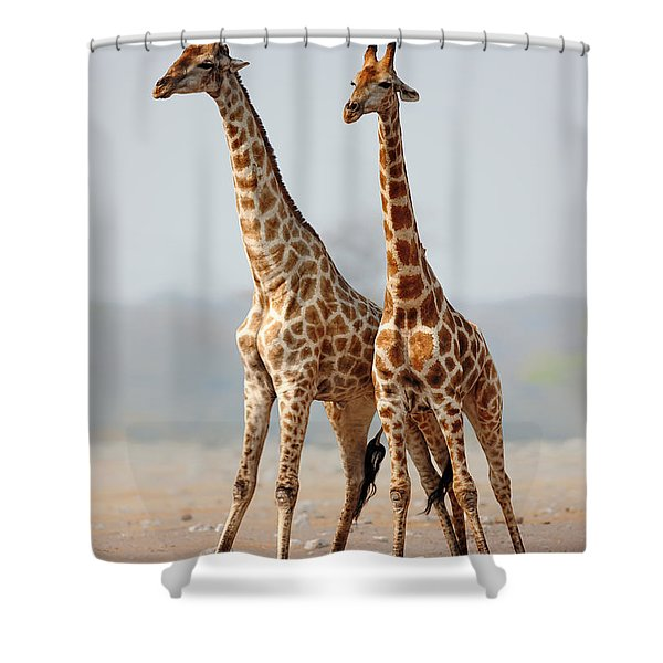Giraffes Standing Together Shower Curtain