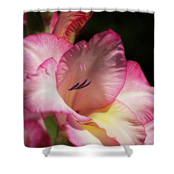 Gladiolus In Pink Shower Curtain
