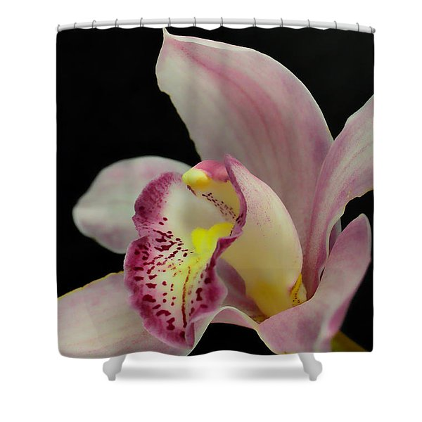 Glamour Pose Shower Curtain