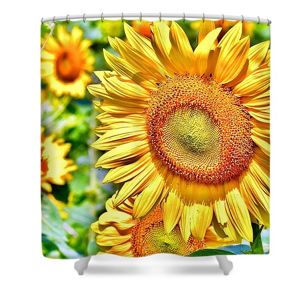 Glorious Sunflowers Shower Curtain