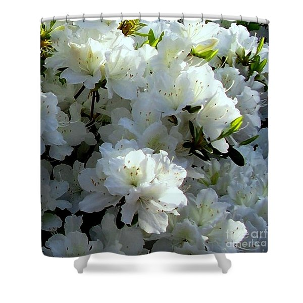 Glory Of White Shower Curtain