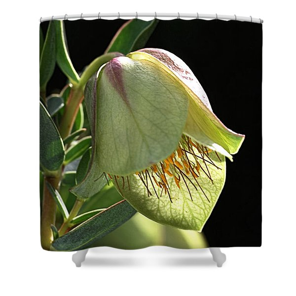 Glow Of The Bell Shower Curtain