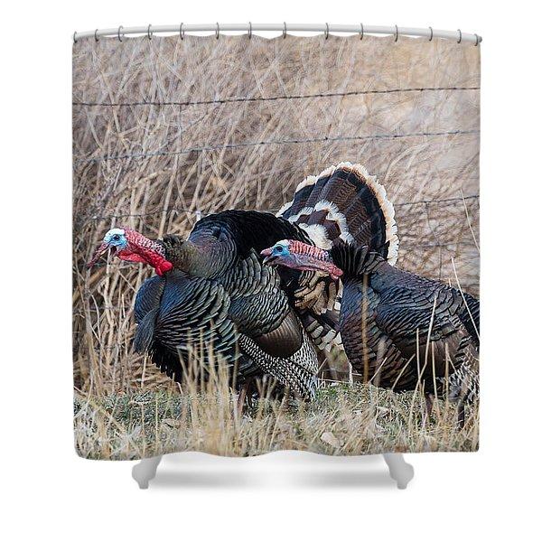 Gobbling Turkeys Shower Curtain