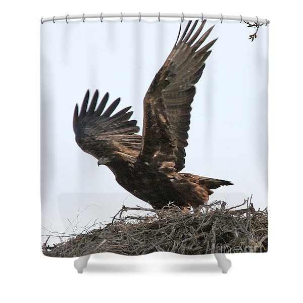 Golden Eagle Takes Off Shower Curtain