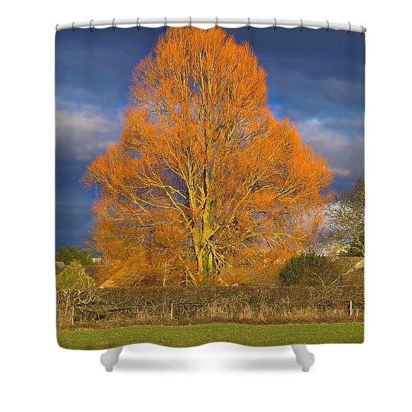 Golden Glow - Sunlit Tree Shower Curtain