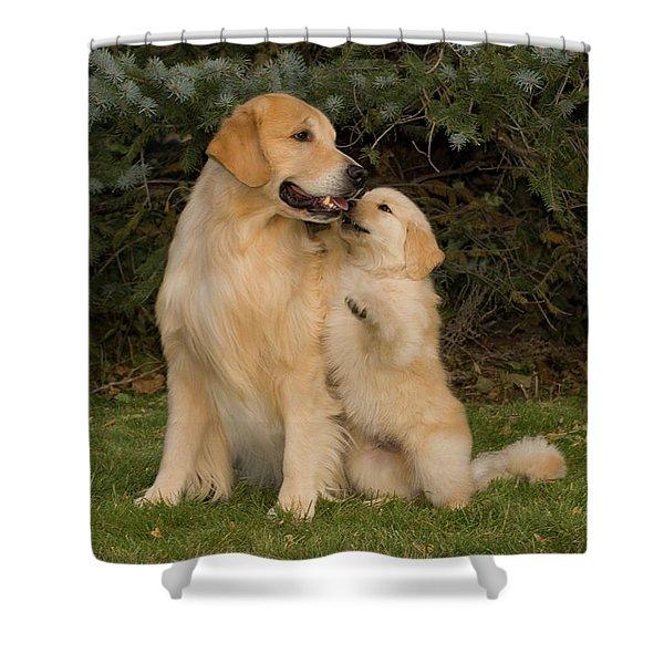 Golden Retriever Puppy Standing Shower Curtain
