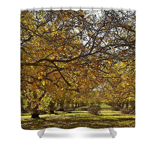 Golden Walnut Orchard Shower Curtain