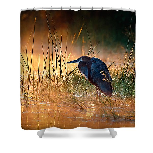 Goliath Heron With Sunrise Over Misty River Shower Curtain