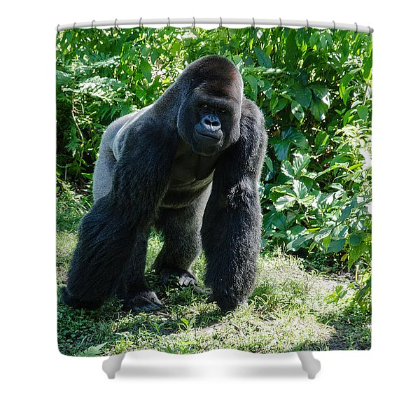 Gorilla In The Midst Shower Curtain