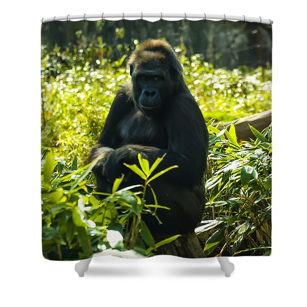 Gorilla Sitting On A Stump Shower Curtain