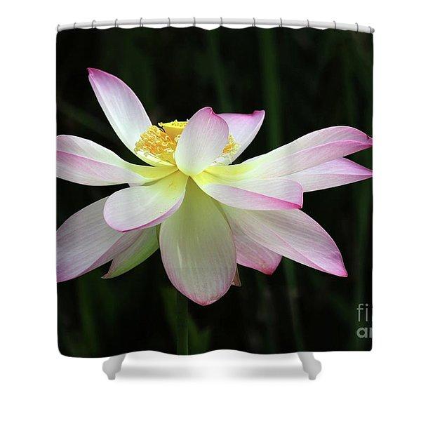 Graceful Lotus Shower Curtain