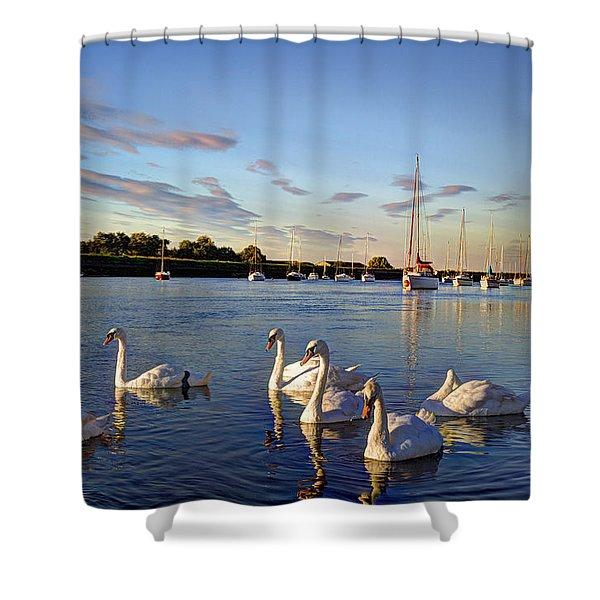 Graceful Swans Shower Curtain