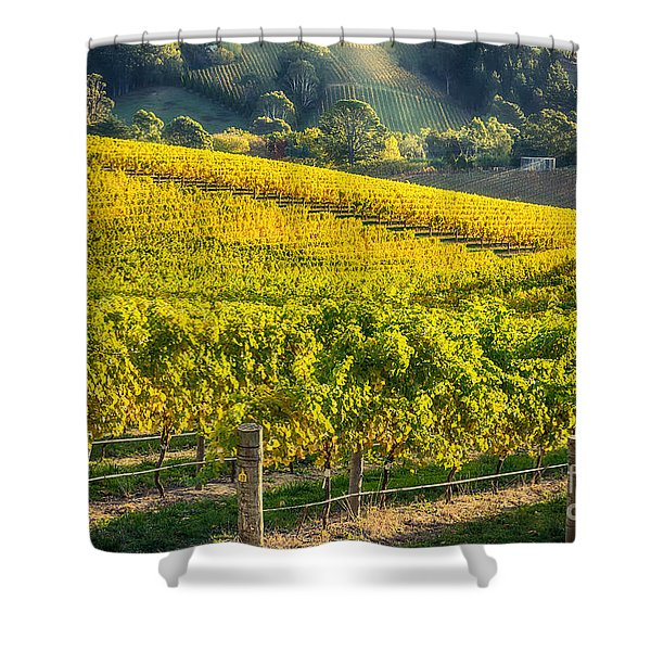 Grape Expectations Shower Curtain
