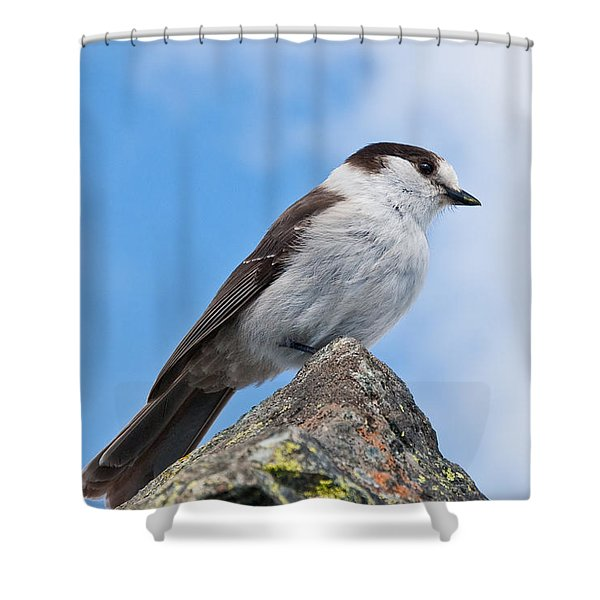 Gray Jay With Blue Sky Background Shower Curtain