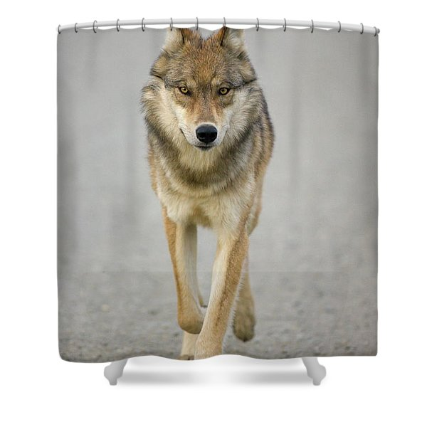 Gray Wolf Denali National Park Alaska Shower Curtain