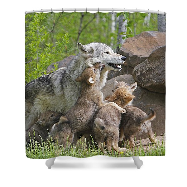 Gray Wolf With Cubs, Canis Lupus Shower Curtain