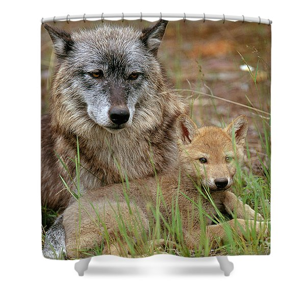 Gray Wolf With Pup Shower Curtain