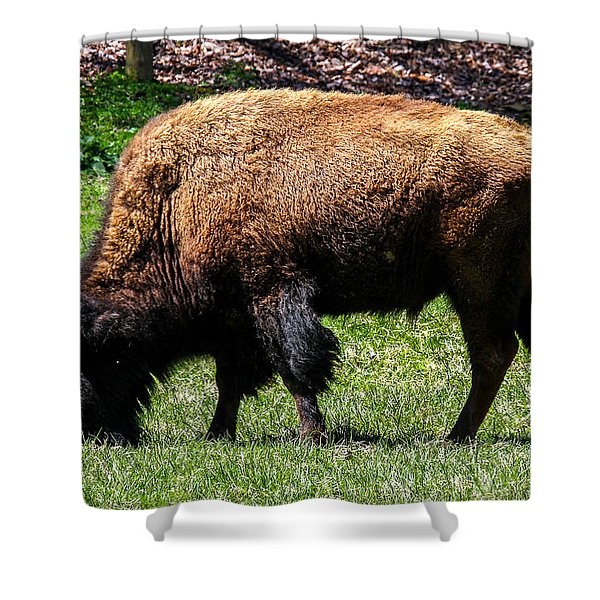Shower Curtain featuring the photograph Grazing In The Grass by Robert L Jackson