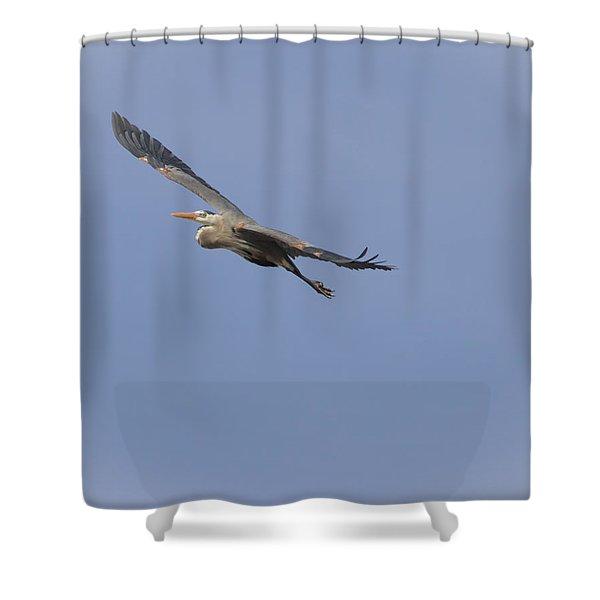 Great Blue Heron In Flight-2 Shower Curtain