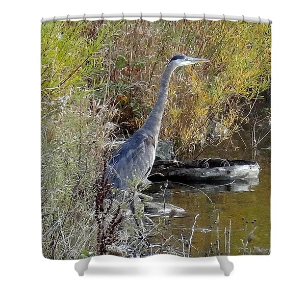 Great Blue Heron - Juvenile Shower Curtain