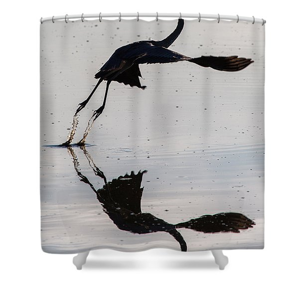 Great Blue Heron Takeoff Shower Curtain