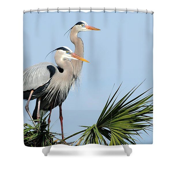Great Blue Herons At Nest Shower Curtain