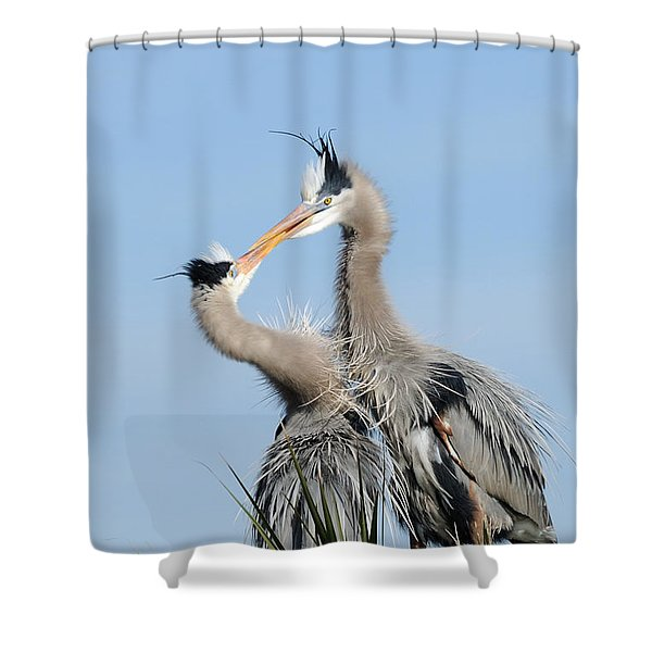 Great Blue Herons At Nest Kissing Shower Curtain