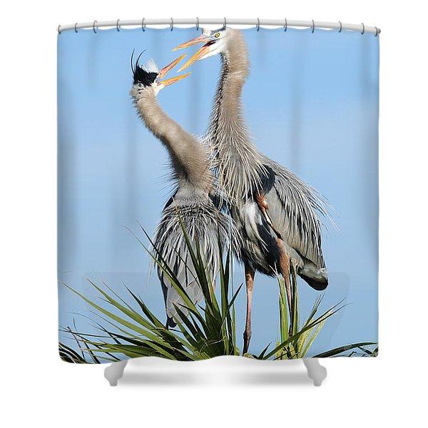 Great Blue Herons At Nest Open Bills Shower Curtain