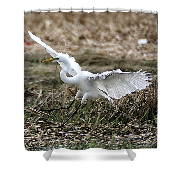Shower Curtain featuring the photograph Great Egret Landing by William Selander