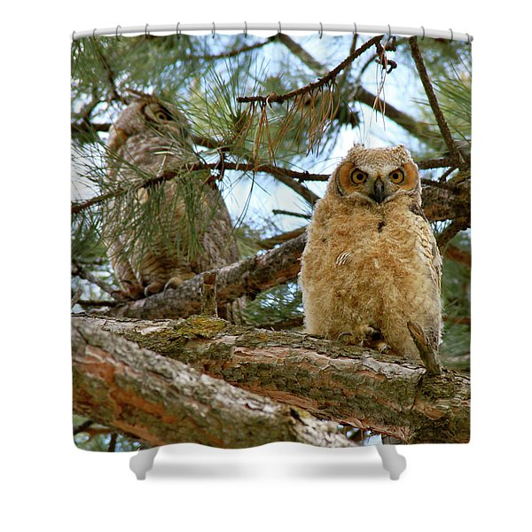 Great Horned Owls Shower Curtain