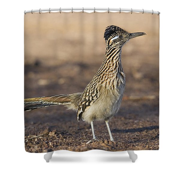 Greater Roadrunner New Mexico Shower Curtain
