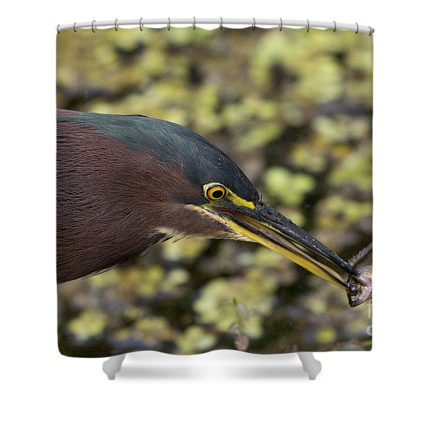 Green Heron Fishing Shower Curtain