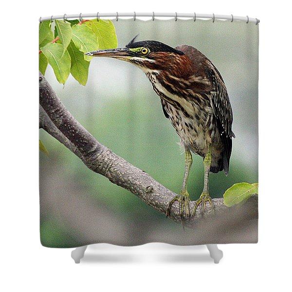 Green Heron In Sumac Shower Curtain