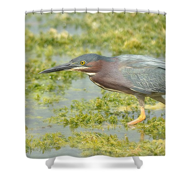 Green Heron On The Hunt Shower Curtain
