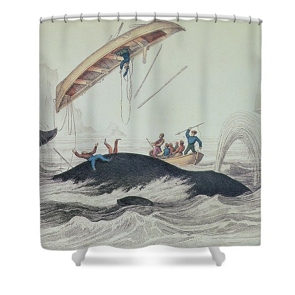 Greenland Whale Book Illustration Engraved By William Home Lizars  Shower Curtain