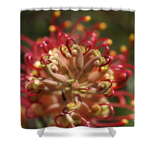 Grevillea Superb Australian Flora Shower Curtain