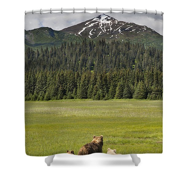 Grizzly Bear Mother And Cubs In Meadow Shower Curtain