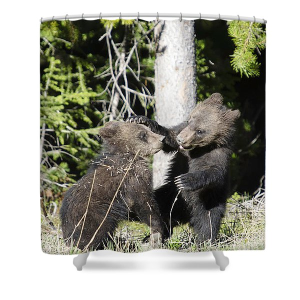 Grizzly Cubs Playing Shower Curtain