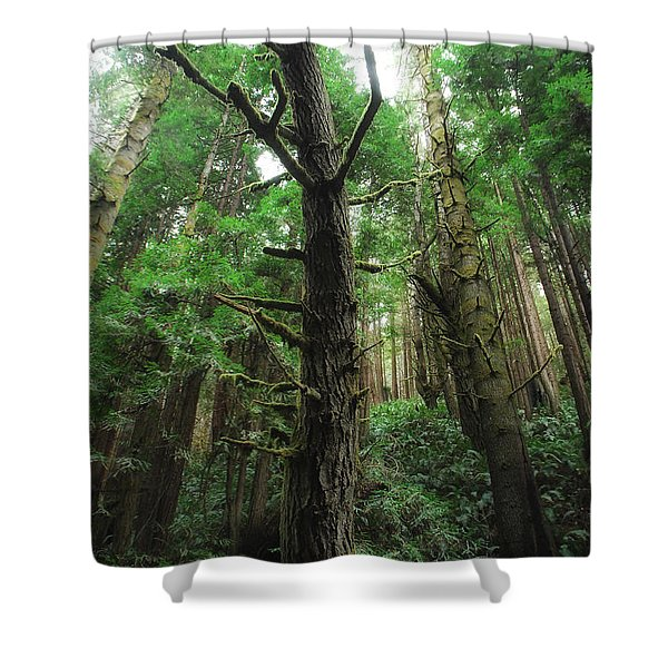 Groovin With The Redwoods Shower Curtain